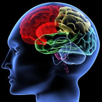 cerveau: c'est juste pour voir comment c'est fait... si vous n'en avez pas ..!